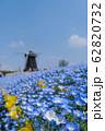 花博記念公園鶴見緑地のネモフィラ 62820732