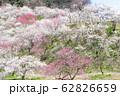高尾山 高尾梅郷 木下沢梅林(こげさわばいりん) 62826659