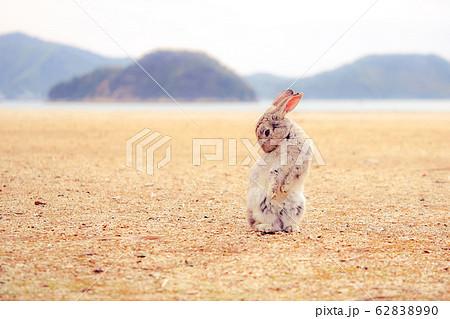 立ちんぼウサギ 62838990