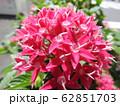 ペンタスの花言葉は願いがかなう。星を思わせる花の姿からついたもの。大切な人への贈り物としてピッタリ。 62851703