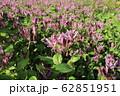 ホトトギスの花言葉は「永遠にあなたのもの」。地味ながら野趣あふれる代表的な秋の山野草である。 62851951