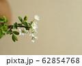 ユキヤナギ 62854768