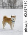 柴犬のいる冬の風景 62857480