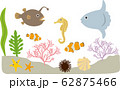 海の生物 62875466
