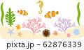 海中生物 62876339