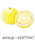 grapefruit_watercolor 62877047