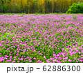 レンゲ畑 62886300