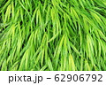 緑色の葉 62906792