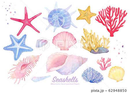 seashells clipart 水彩イラストセット(貝殻 珊瑚 ヒトデ) 62948850