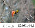 柿の葉と、メジロ 62951448