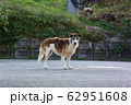 野犬 62951608