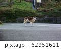 野犬 62951611