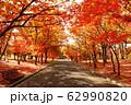 写真素材:紅葉する並木道 62990820
