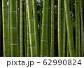写真素材:日本の竹、竹林 62990824