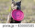 子犬 仔犬 小犬 こいぬ puppy 犬 戌 戌年 干支 十二支 レトリバー ラブラドール 63000585