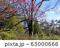 【東京都】早春の神代植物公園 63000666