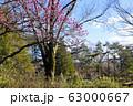 【東京都】早春の神代植物公園 63000667