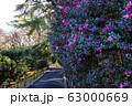 【東京都】早春の神代植物公園 63000669
