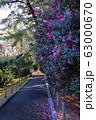 【東京都】早春の神代植物公園 63000670