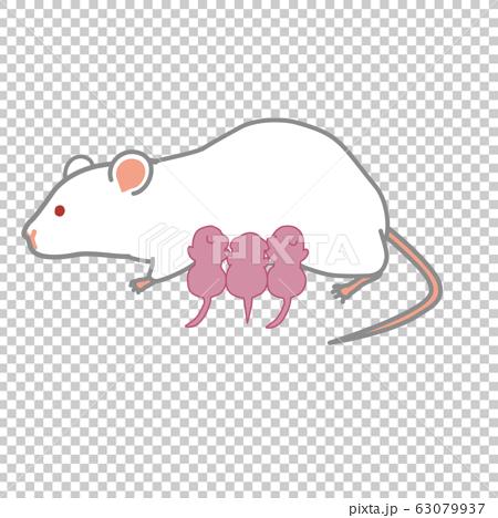 授乳中のマウス 63079937