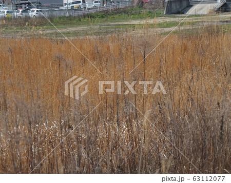 荒れ地 空き地 perming写真素材 63112077