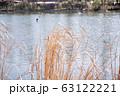 揺れる草 水面 井の頭池 63122221