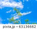 白樺の新緑と青空 【長野県】 63136662