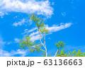 白樺の新緑と青空 【長野県】 63136663