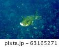 海 写真 63165271
