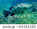 海 写真 63165282