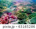 海 写真 63165286