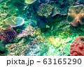海 写真 63165290