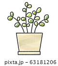 観葉植物 63181206