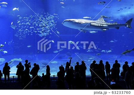 沖縄美ら海水族館 63233760