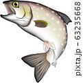 アメマス (渓流魚) 63235668