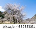 高尾山 旧甲州街道 高尾梅郷・するさし梅林 63235861
