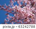 桜が満開 63242788