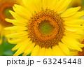 ヒマワリ・三ノ倉高原(福島県・喜多方市) 63245448