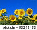 ヒマワリ・三ノ倉高原(福島県・喜多方市) 63245453