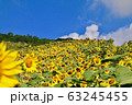 ヒマワリ・三ノ倉高原(福島県・喜多方市) 63245455