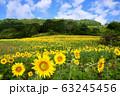 ヒマワリ・三ノ倉高原(福島県・喜多方市) 63245456