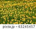 ヒマワリ・三ノ倉高原(福島県・喜多方市) 63245457