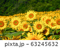 ヒマワリ・三ノ倉高原(福島県・喜多方市) 63245632