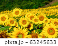 ヒマワリ・三ノ倉高原(福島県・喜多方市) 63245633