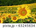 ヒマワリ・三ノ倉高原(福島県・喜多方市) 63245634