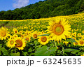 ヒマワリ・三ノ倉高原(福島県・喜多方市) 63245635