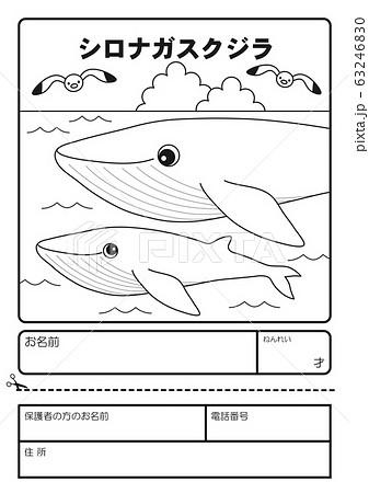 シロナガスクジラ ぬりえ 応募用紙 63246830