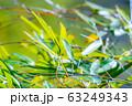 笹の葉 アップ 【東京都】 63249343