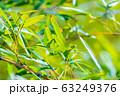 笹の葉 アップ 【東京都】 63249376