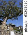 諏訪神社の大門と御神木 63293910